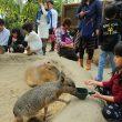 kapibara_fureai_doubutuoukoku_4